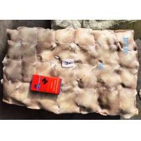 Quality Block Frozen Illex Squid Wing / Argentina Squid Gmp Certification for sale