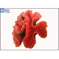 Buy Fake Coral Natural Aquarium Decorations Fish Tank Background with Silicone and Polyresin at wholesale prices