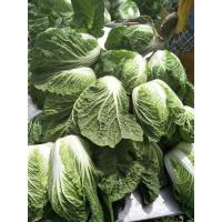 Quality Delicious Chinese Manufactured Cabbage , Cruciferous Chinese Flowering Cabbage for sale