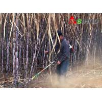 Buy cheap The Factory Price Small Multi-Purpose Lawn Sugarcane Harvester for Cutting from wholesalers
