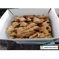 Quality Own Bases Organic Fresh Ginger Storage Temperature 10 °C - 15 °C for sale