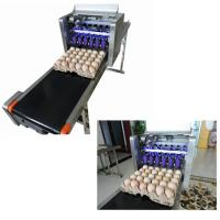 Automatic Egg Printing Machine For Date , Time , Serial Number for sale