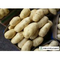 Quality 100 % Natural Fresh Potato 10 Kg / Bag Packing No Pesticide Residues for sale