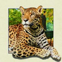 Quality Custom Lenticular Image Printing For Gift , 5d Animal Collage Poster 15.7x15.7 Inches for sale
