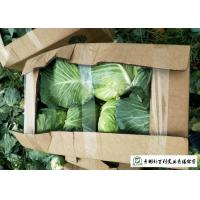 Quality Natural Hue All Season Cabbage 2.5 Kg / Per Helps Improve Digestion for sale