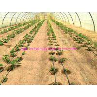 1g/m Stable Agricultural Tomato Tying Twine High Tenacity Different Colored