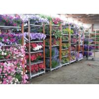 Quality Light duty movable flower trolley for greenhouse for sale