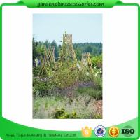Buy cheap Straight Garden Bamboo Stakes from wholesalers