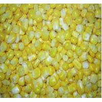 China Frozen Sweet Corn IQF Sweet Corn on sale