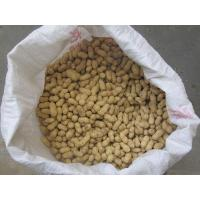 Quality New fresh season peanut in shell with the competitive price for export for sale