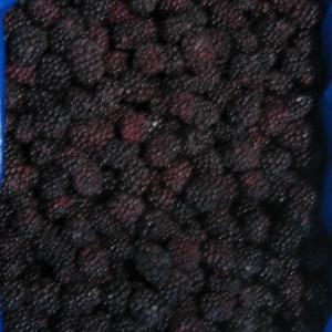 China Frozen organic blackberry on sale
