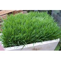 Buy cheap hot selling fake grass for landscaping from wholesalers