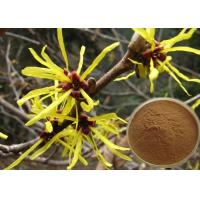 Quality Antipruritic Tannin Hamamelis Virginiana Extract , Witch Hazel Extract For Hair Color Protection for sale