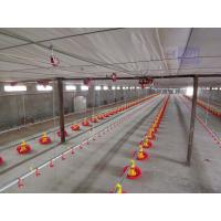 Quality animal breeding equipment for chicken for sale