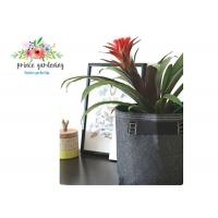 Buy Classic Line Tequila Sunrise Plant Grow Bags / Gardening Bags Sacks Black 25lb at wholesale prices