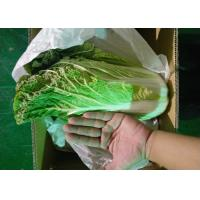 Quality Healthy Organic Chinese Cabbage Japan Standard Big Size Own Bases for sale
