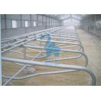 Quality Continuous Animal Locking Feed Barriers Metal Free Cubicles For Feedlot for sale