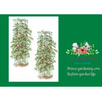 "Quality Heavy Duty Metal Square Tomato Cages With 8"" Square Openings for sale"