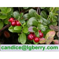 China (Canada Imported Cranberry) Fruit juice concentrate cranberry extract on sale