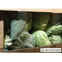 Quality Wholesaler All Season Cabbage Green Color Rich In Vitamin C Easy Stockpile for sale