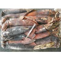 Quality Whole Round Frozen Giant Squid for sale