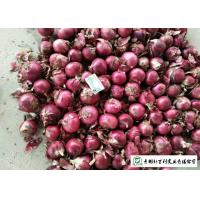 Quality Juicy Sweet Red Onion 10 Kg / Bag Packing White Flesh For Cooking for sale