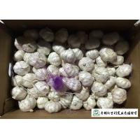 Quality Food Grade Fresh Organic Garlic Common Cultivation 5.5 / 6.0 Cm Size for sale