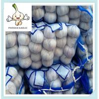 Quality High Quality Fresh Pure White Garlic, Purchase Garlic Jinxiang Fresh Red Garlic Factory for sale