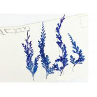 Quality 6 Different Colors Fern Leaves Real Dried Flowers, Mounting Pressed Flowers For Home Decoration for sale