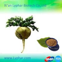 China 2016 High Quality Manufacturer Maca Extract Powder on sale