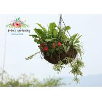 Quality Semi-Circle Light Weight Hanging Planter Basket For Home & Garden for sale