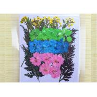 China Flowers / Leaf Pressed Flower Bouquet Candle Ornaments For Manual Activity Stuff on sale