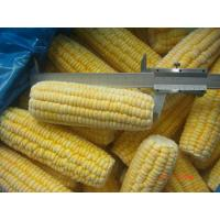 China frozen sweet corn on cobs, frozen sweet corn kernels on sale