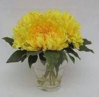 Quality Small acrylic glasses flower display holder for sale