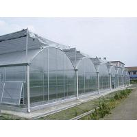 Agriculture PC Sheet Greenhouse Fashionable Appearance With 3 Roofs Every Span for sale