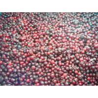 Quality IQF Frozen lingoberry for sale