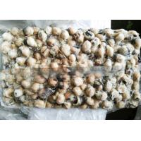 Quality grilled Squid Mouth raw material ISO22000 for sale