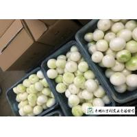 Quality Natural Fresh Onions , Fresh White Onion Suitable Dry Storage Environment for sale