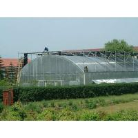 White / Transparent Commercial Outdoor Greenhouse Transmittance Rate >80% for sale
