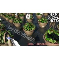 Quality black plastic weed barrier PP ground cover fabric /pp woven silt fence fabric for sale