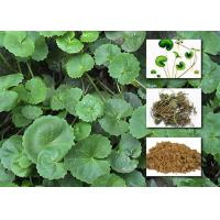 Quality Gotu Kola Extract Powder Cosmetic Raw Materials Asiaticoside For Enhancing Immunity for sale