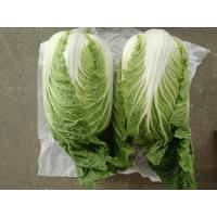 Quality Improve Digestion Mini Drumhead Cabbage , Late Flat Dutch Cabbage 1-3KG/PER for sale