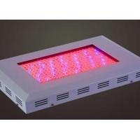 Quality TJ-ZWD4 square LED large power grow light for sale