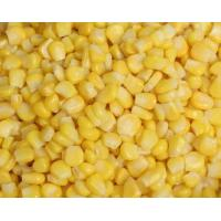 China New Crop IQF Frozen Sweet Corn on sale