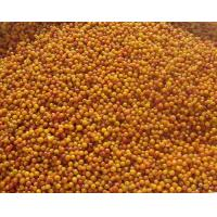 Quality Frozen Fruits NAME: Frozen Seabuckthorn for sale