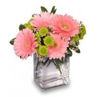 Quality Get Well Flowers FRUIT SORBETGerbera Bouquet for sale
