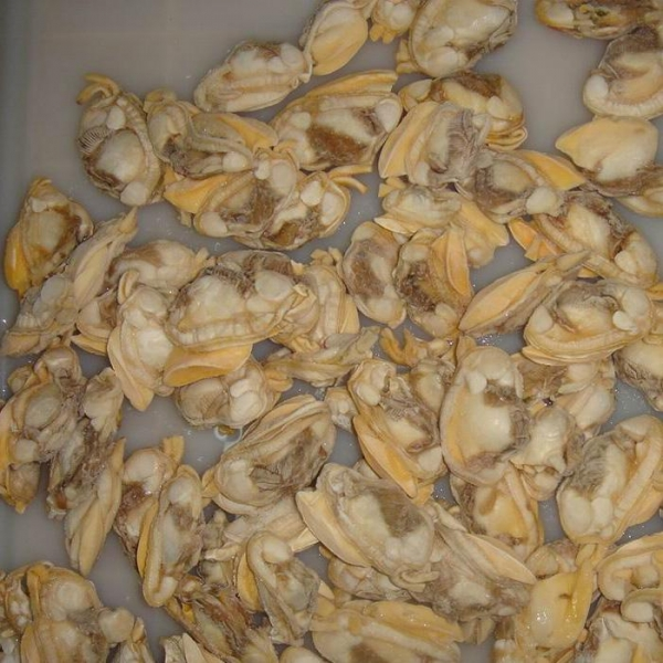 Buy seashell at wholesale prices