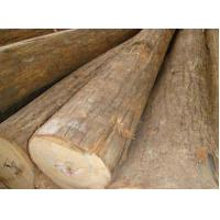 Import logs Russian basswood