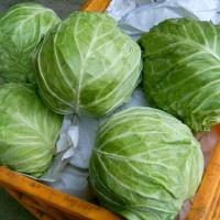 Buy cheap Frozen vegetables Frozen Cabbage Chopped from wholesalers