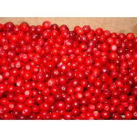 Quality Frozen fruit Frozen lingonberry for sale